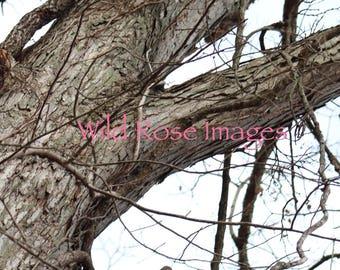 Tree and vine print