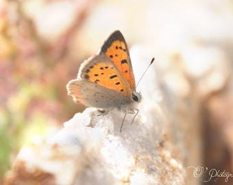 Papillon sur photographie pierre de Quartz - marron orange rouille couleur tan pépinière décoration rustique animal amoureux de la nature 5 x 7 8 x 12 10 x 10