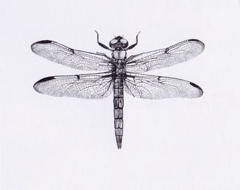 Dragonfly_two_- Original Pencil Drawing, wildlife art
