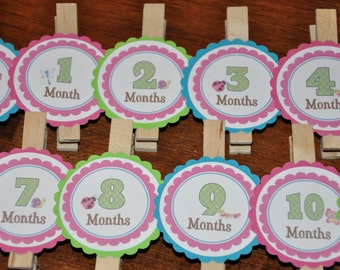 Bug Photo Clips. Bug Party. Insect. Photo Clips. Picture Banner. Set of 13. Newborn. 12 months. First Birthday. Choose Girl or Boy