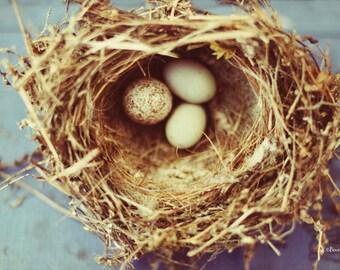 nature, nest, bird, eggs, fine art photography