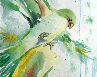 Parakeet, green bird, original watercolor painting, monk parakeet, parrot, bird art, bird, original art, tropical bird, artist signed