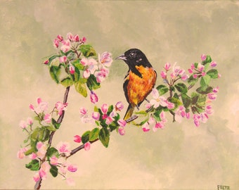 Baltimore Oriole on Apple Blossoms