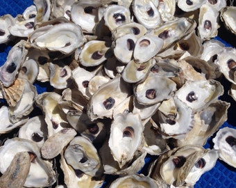 Cup side Oyster shells-- two dozen CUP side beautiful oyster shells