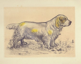 Antique Dog Print, Clumber Spaniel Print, Hunting Dogs Sporting Breeds 1944