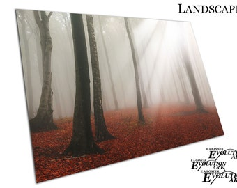 Dreamy white sun beams Red carpet of leaves Forest sunlight Poster Print X1237
