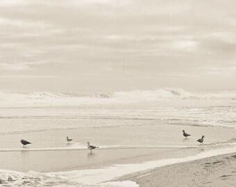 Seabirds:  Jersey Shore print on bamboo wood panel