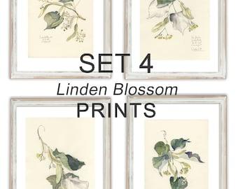 SET 4 Linden Blossom PRINTS - Pencil & Watercolor drawings - Linden botanical prints - art by Catalina.