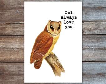 Owl always love you, owl quote art print / love wall art digital print / bay owl 8x10