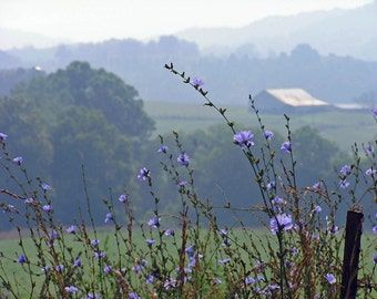 Farm View 8x10 Photo Wall Art Chicory Wildflower Landscape Smoky Mountain Barn Photography Tennessee Summer