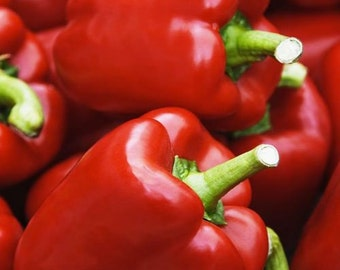 King of the North Heirloom Sweet Bell Pepper Seeds Open Pollinated Non-GMO Naturally Grown Open Pollinated Gardening
