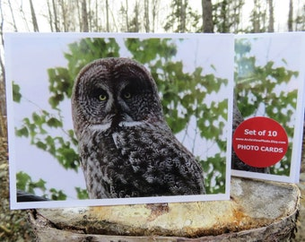 Owl - Glossy Greeting Card - Set of 10