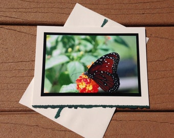 Beautiful Butterfly Notecard Blank Greeting Card