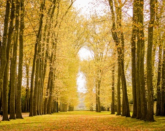 Fall in Versailles photograph, fine art Paris photography, travel photo, golden autumn colors