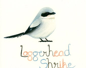 Loggerhead Shrike Bird Original Watercolor Painting 7x7 inches