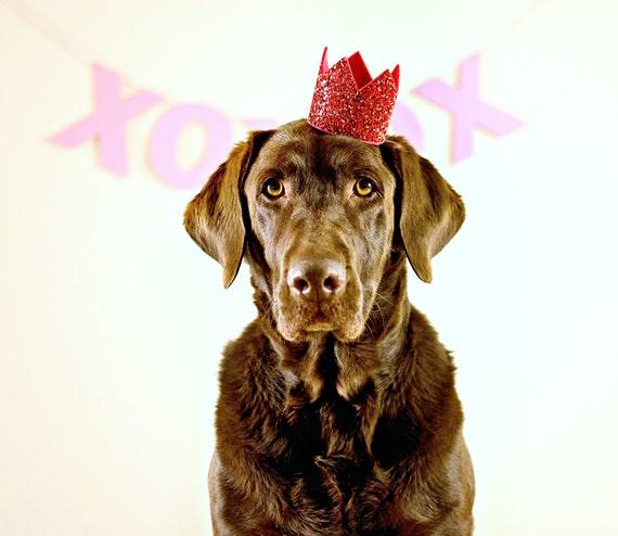 Dog Birthday Hat || February Birthday || Dog Birthday || Birthday Crown Glitter Red || Pet Portrait