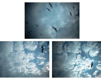 Travel Photography Print - Birds, Isla Mujeres, Mexico - Triptych