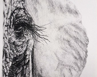 Original Charcoal Elephant Drawing No. 1