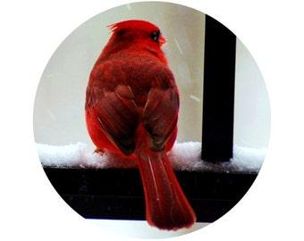 Cardinal Photo, Bird Photograph, Black, White, Red, Crimson, Nature, Circle, Round Image - 5x5 inch Print - Cardinal in the Snow