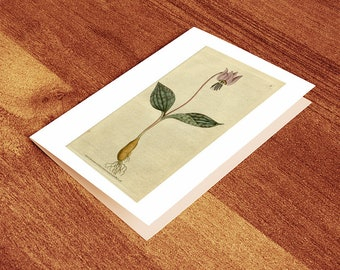 Blank Greeting Card of Botanical Print - Erythronium dens-canis (Dogs-Tooth Violet)  1787. Vintage Home Deco Style Old Wall Reprint