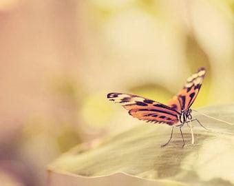 butterfly photography orange nursery decor nature photography orange home decor butterfly wings art