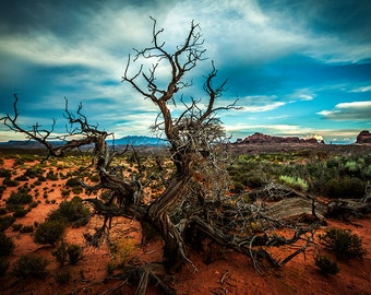 "Art Print: ""Desert Tree"" in Arches National Park in Utah 2014, Rocky Mountains in background, Utah Art, Utah Fine Art Photography USA"