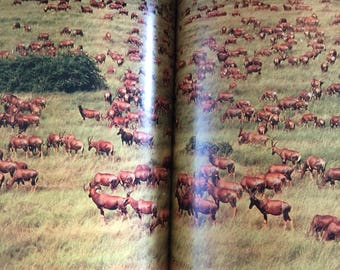 Vintage National Geographic 1970's Animals of East Africa The Wild Realm