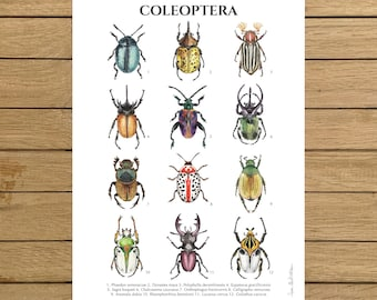 """Beetles, Insects, Coleoptera, Beetle Poster, Giclee Print, Watercolor Illustration, Wall Art Decor, Poster, A4, A3, A3+, 8.5""""x11"""", 13""""x19"""""""