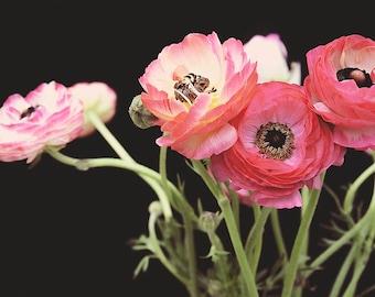 "Still Life Photography / Ranunculus Print / Dark Floral Wall Art / Pink Green Black / Ranunculus Flower Photography Wall Art ""Dark Light"""