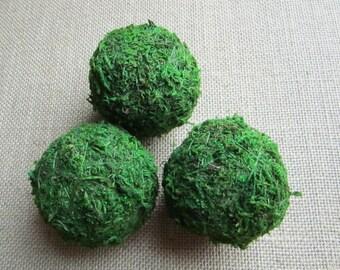 moss balls - Set of 3 - Small