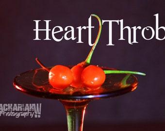 Heart Throb (15+ Seeds)