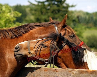 Horsey Love, horse greeting card, blank card, write your own msg, horse lovers card, friendship card