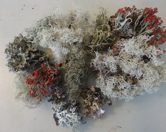 Mini Mix,  Lichen and Moss