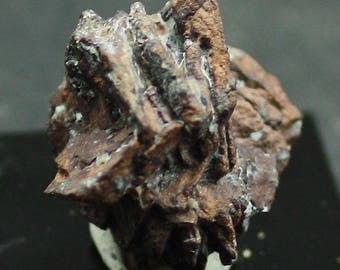 Native Copper pseudo after Azurite 'rose', New Mexico  New find Tucson 2017! Mineral Specimen for Sale