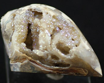 Iridescent Drusy Quartz-lined Fossil Gastropod shell, India.  Mineral Specimen for Sale