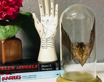 taxidermy fruit bat inside glass cloche jar