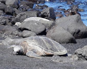 Turtles at Punalu'u Beach 2