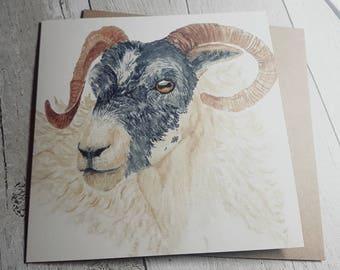 Scottish Blackface Sheep / Ram - Blank Art Card