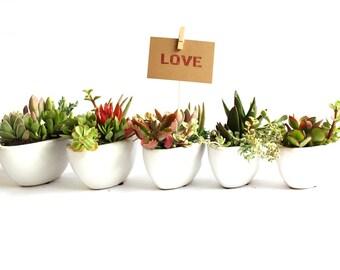 Succulent Favors 'Little Love Boat Fleet' Set of 8 - We deliver!