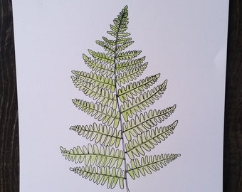 Fern Drawing, Watercolor, reproduction from original drawing
