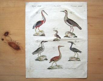 Antique Stork, Heron, Bird Bertuch Print original vintage engraving plate  dated 1808