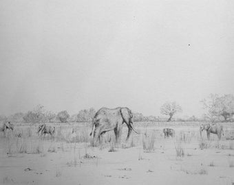 Elephants at Sundowners, South Luangwa