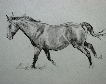 SALE Original horse art equine art energy and movement equine horse charcoal and chalk movement art drawing 'Canter II' by H Irvine