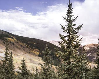 Fir Tree Forest Living Room Art Colorado Wall Art Nature Prints for Bedroom Mountains Photo Cloudy Sky Breckenridge Decor Tree Photos
