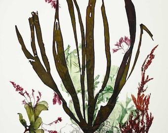 Art de l'algue, pressé d'algues, algues Pressings, varech naturelle algue œuvres d'art, Beach cottage décor, algues Alganet Original Collage 22 x 29