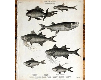 1809 ANTIQUE FISH ENGRAVING  sea life original antique ocean animal engraving print