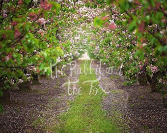 Cherry Blossom Orchard Digital Backdrop Background Photography Photoshop Composite Stock