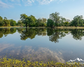 Water Pans - Digital Download Photograph, Landscape, Water, Nature, Trees, Reflection