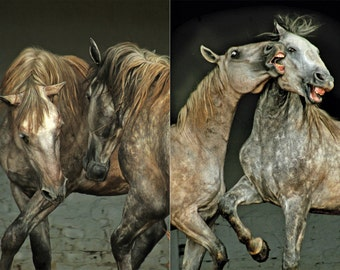 Set of five fine art greeting cards with fotographs of lipizzan  horses
