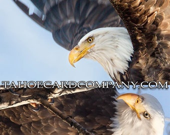 American Bald Eagle Bookmark Postcard